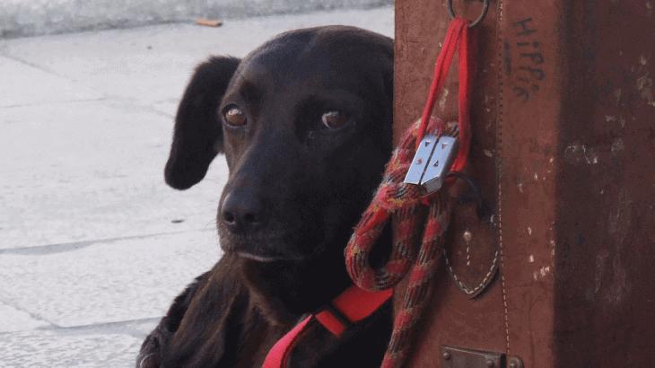 viajar perro